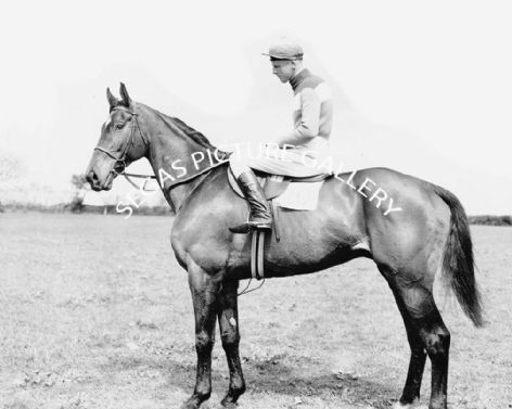 Racehorse Quare Times with Jockey Pat Taaffe